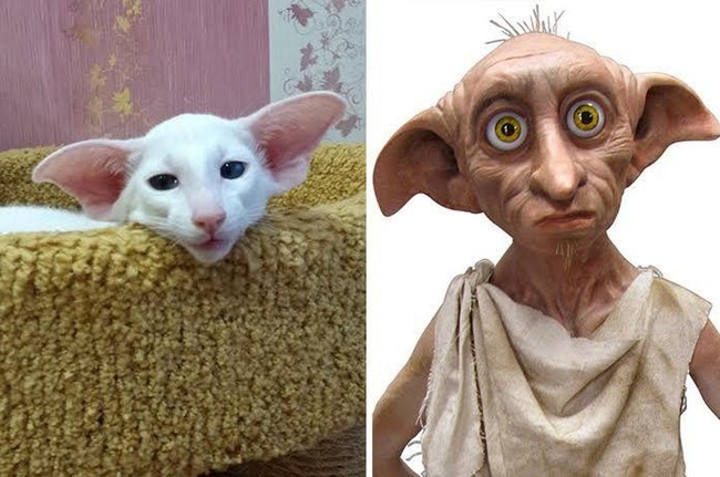 23 Animals That Look Like Famous Fictional Characters