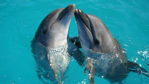 11 Weird Sex Facts That Prove Dolphins Are DTF