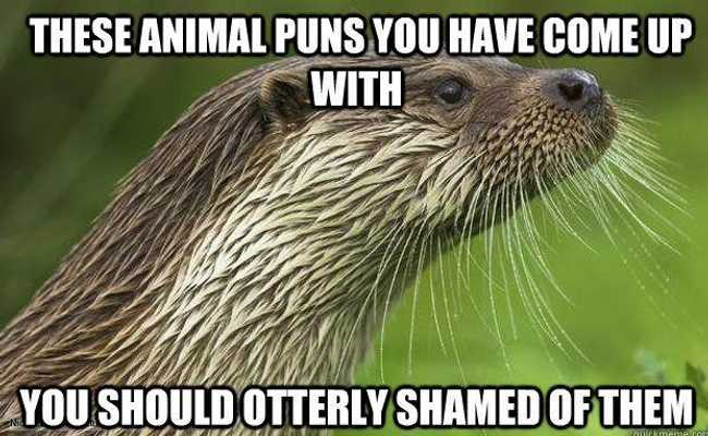 Funniest Animal Puns