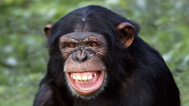 Humor In Animals: The Species That Can Laugh