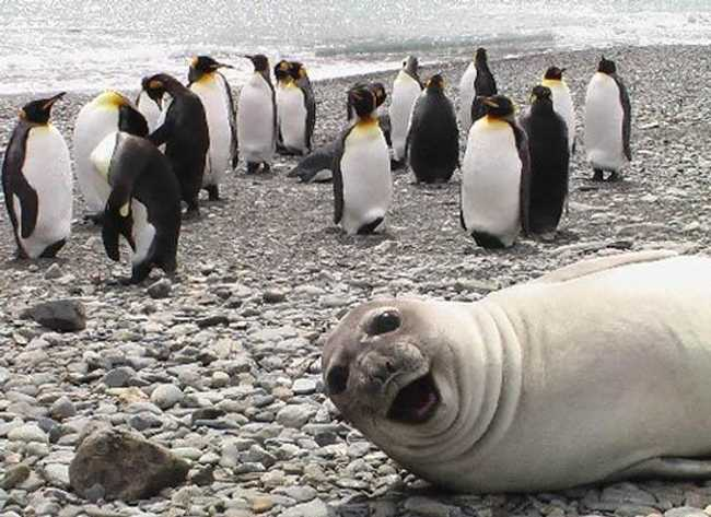 The 37 Greatest Animal Photobombs Ever