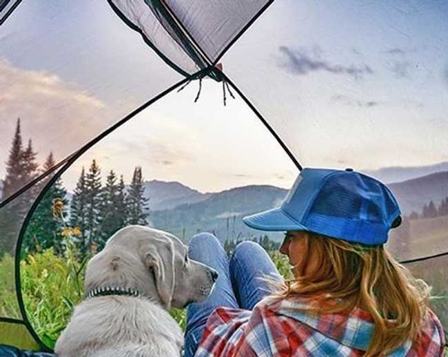40 Dogs Who Love Going Camping