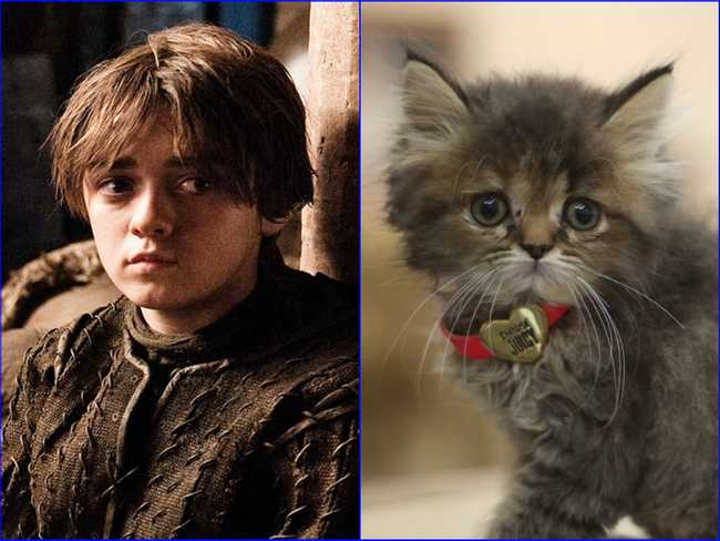 25 Cats Who Look Like GoT Characters
