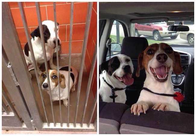 The Cutest Before and After Pictures of Adopted Dogs