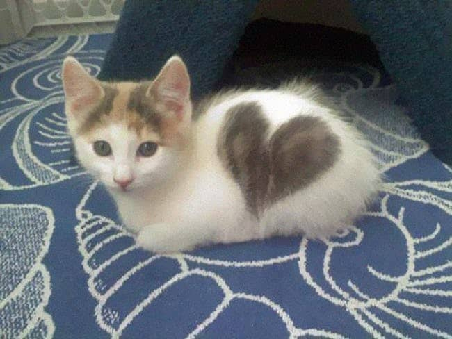 Cats with Totally Cool Markings