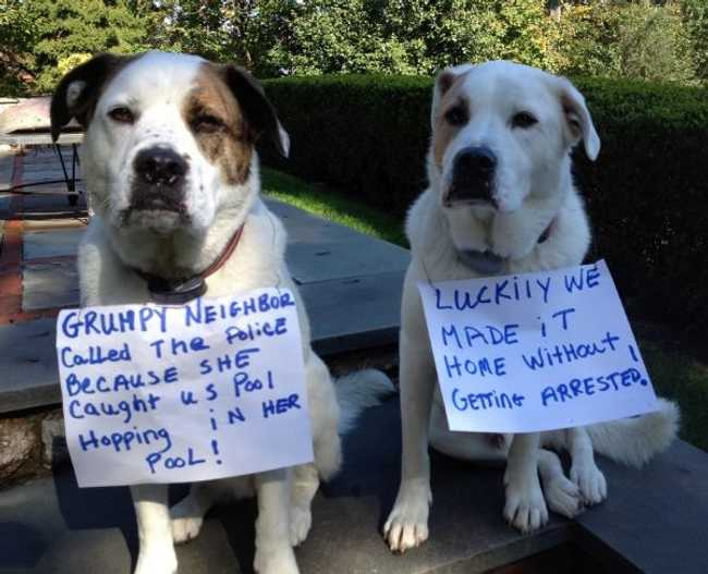Hilarious Dog Shaming Photos Ever
