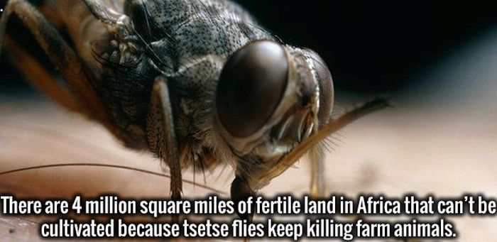 22 Useless But Interesting Facts